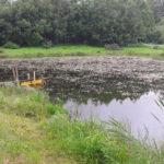 Veekogu niitmine enne