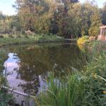 Veekogu niitmine pärast